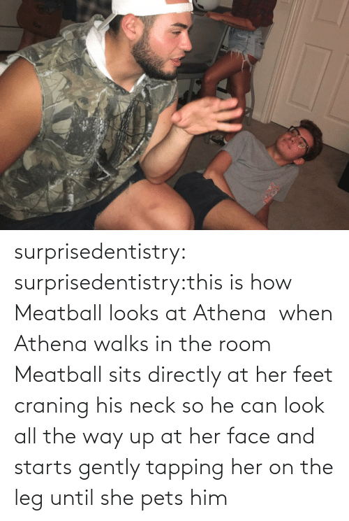 Starts: surprisedentistry:  surprisedentistry:this is how Meatball looks at Athena  when Athena walks in the room Meatball sits directly at her feet craning his neck so he can look all the way up at her face and starts gently tapping her on the leg until she pets him