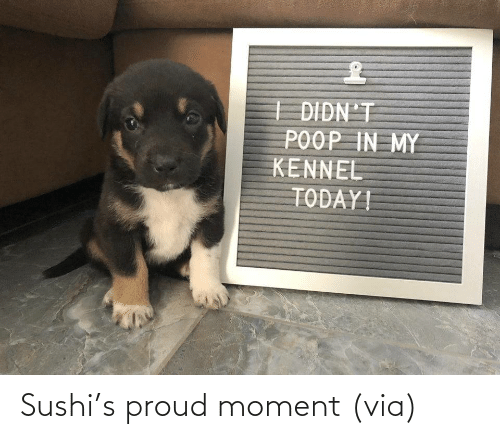 aww: Sushi's proud moment (via)