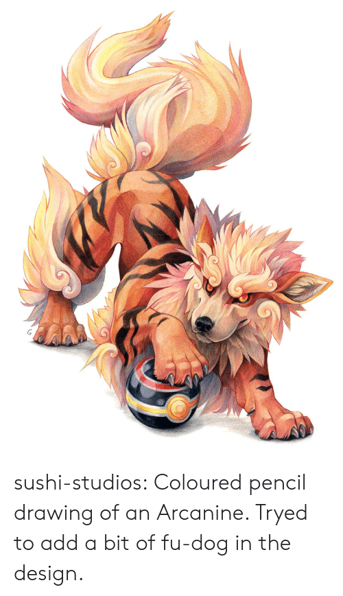 Drawing Of An: sushi-studios:  Coloured pencil drawing of an Arcanine.  Tryed to add a bit of fu-dog in the design.