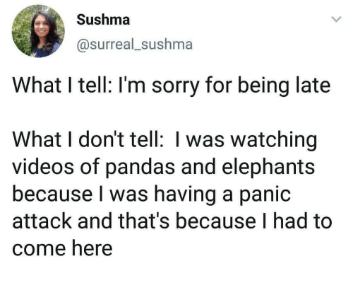 Elephants: Sushma  @surreal_sushma  What I tell: I'm sorry for being late  What I don't tell: I was watching  videos of pandas and elephants  because I was having a panic  attack and that's because I had to  come here