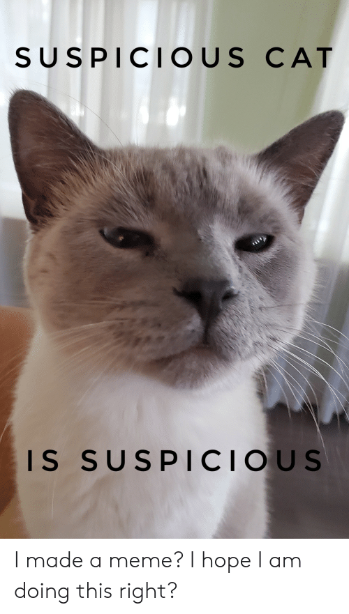 Meme, Hope, and Cat: SUSPICIOUS CAT  IS SUSPICIOUS I made a meme? I hope I am doing this right?