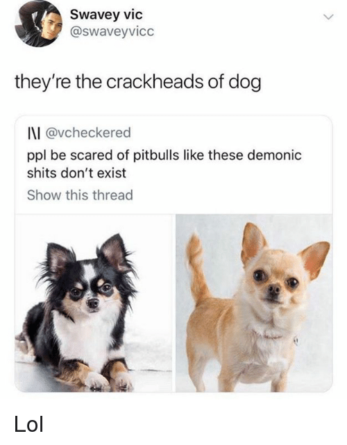 Lol, Memes, and 🤖: Swavey vic  @swaveyvicc  they're the crackheads of dog  I\I @vcheckered  ppl be scared of pitbulls like these demonic  shits don't exist  Show this thread  ·匪 Lol