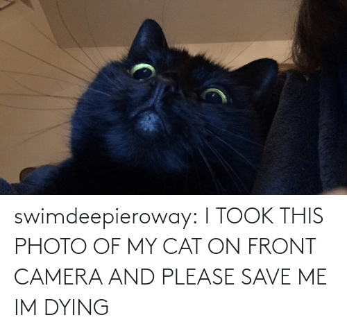 Please Save Me: swimdeepieroway:  I TOOK THIS PHOTO OF MY CAT ON FRONT CAMERA AND PLEASE SAVE ME IM DYING