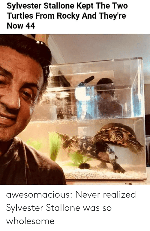 turtles: Sylvester Stallone Kept The Two  Turtles From Rocky And They're  Now 44 awesomacious:  Never realized Sylvester Stallone was so wholesome