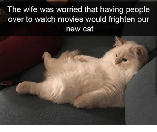 Movies, Watch, and Wife: T he wife was worried that having people  over to watch movies would frighten our  new cat