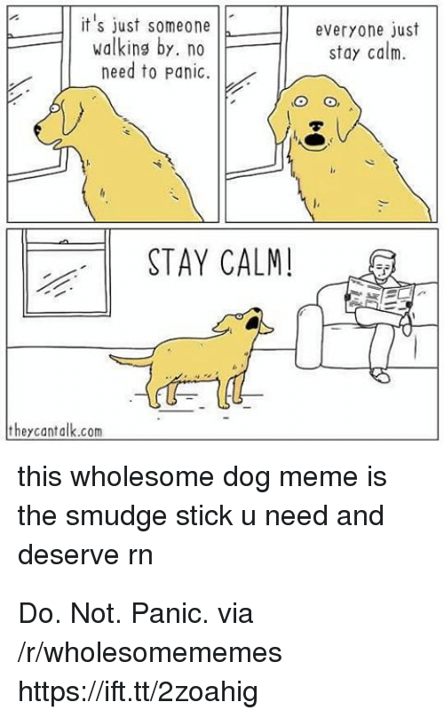 Dog Meme: T it's just someonJE  walking by. no  everyone)ust  stay calm.  need to Panic.  STAY CALM!  theycantalk.com  this wholesome dog meme is  the smudge stick u need and  deserve rn Do. Not. Panic. via /r/wholesomememes https://ift.tt/2zoahig