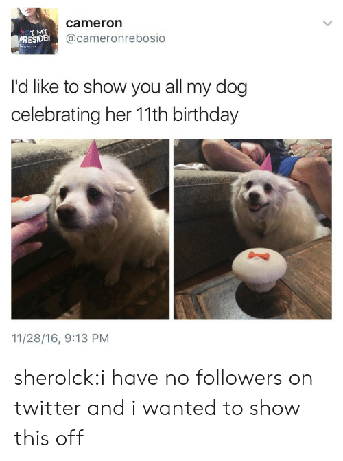 Presiden: T MY  PRESIDEN  cameron  @cameronrebosio  No  I'd like to show you all my dog  celebrating her 11th birthday  11/28/16, 9:13 PM sherolck:i have no followers on twitter and i wanted to show this off
