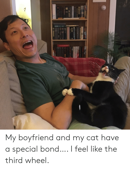 Stephen, Boyfriend, and Cat: T N NGt  STEPHEN KG  STEPMEN KN  RIC  CTar  iPEN N  STEPHENING  TRE STRG  KING  PI  MISKHY  STEME  rVIV  1s T  ONINIHS My boyfriend and my cat have a special bond…. I feel like the third wheel.