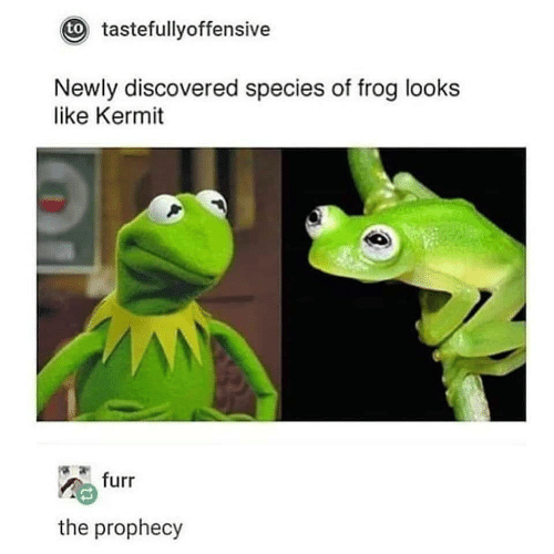 kermit: t tastefullyoffensive  Newly discovered species of frog looks  like Kermit  furr  the prophecy