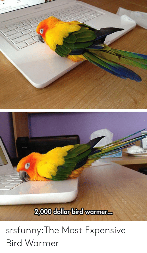 Tumblr, Blog, and Net: tacdo  2,000 dollar bird warmer... srsfunny:The Most Expensive Bird Warmer