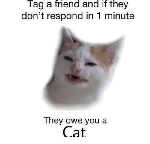 tag a friend: Tag a friend and if they  don't respond in 1 minute  They owe you a  Cat