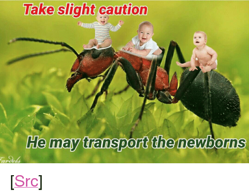 """Reddit, Com, and May: Take slight caution  He may transport the newborns  anoels <p>[<a href=""""https://www.reddit.com/r/surrealmemes/comments/7vfx1p/t_h_e_i_n_f_a_n_t/"""">Src</a>]</p>"""