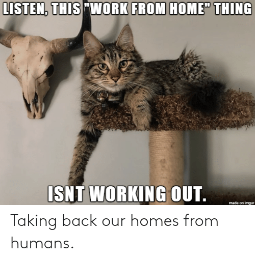humans: Taking back our homes from humans.
