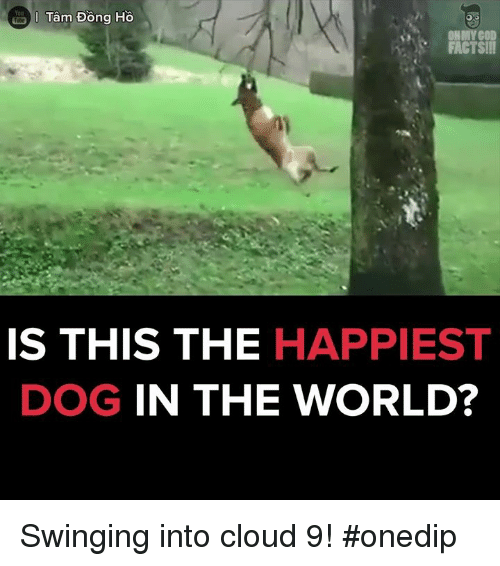 Memes, Oh My God, and Cloud: Tam Dong Ho  Yoa  OH MY GOD  FACTS!!!  IS THIS THE HAPPIEST  DOG IN THE WORLD? Swinging into cloud 9! #onedip