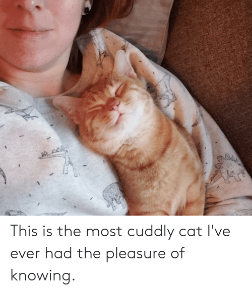 Cat, Knowing, and This: TAM This is the most cuddly cat I've ever had the pleasure of knowing.