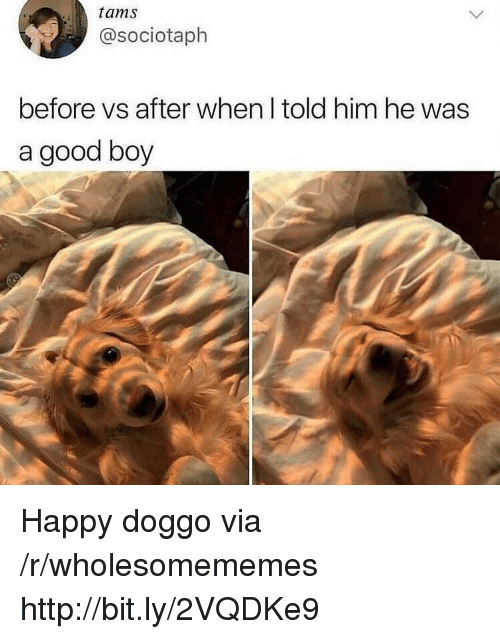 Good, Happy, and Http: tams  @sociotaph  before vs after when I told him he was  a good boy Happy doggo via /r/wholesomememes http://bit.ly/2VQDKe9
