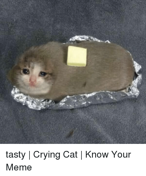 know your meme: tasty   Crying Cat   Know Your Meme