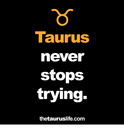 Taurus, Never, and Com: Taurus  never  stops  trying  thetauruslife.com