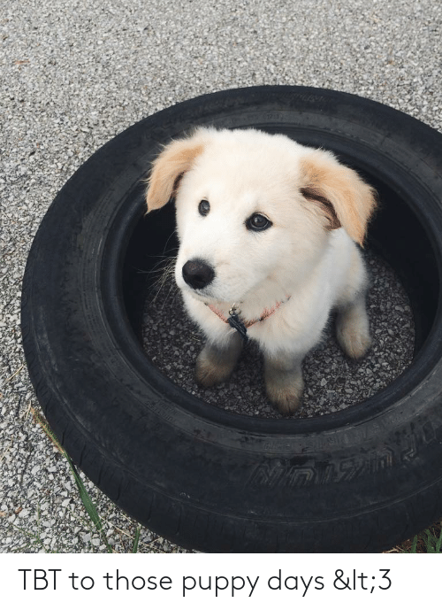 TBT: TBT to those puppy days <3