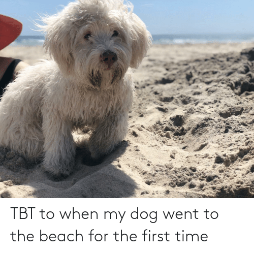 TBT: TBT to when my dog went to the beach for the first time