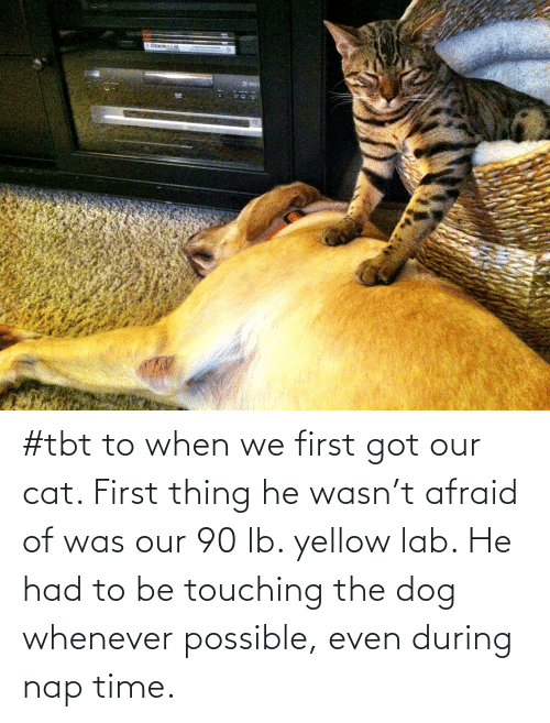 TBT: #tbt to when we first got our cat. First thing he wasn't afraid of was our 90 lb. yellow lab. He had to be touching the dog whenever possible, even during nap time.
