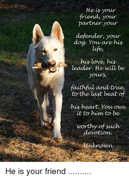 Life, Love, and Memes: te is your  friend, your  partner your  your  dog. Yow are his  life  his love his  leader. He will be  yours  faithful andtrue,  to the last beat of  his heart. Youowe  it to him to be  worthy of such  devotion  nknown He is your friend ..........