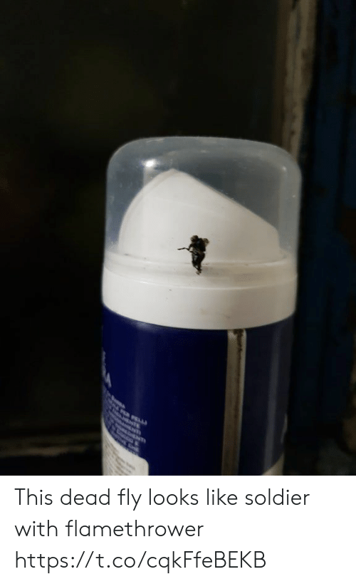 Faces-In-Things, Fly, and Soldier: TE This dead fly looks like soldier with flamethrower https://t.co/cqkFfeBEKB