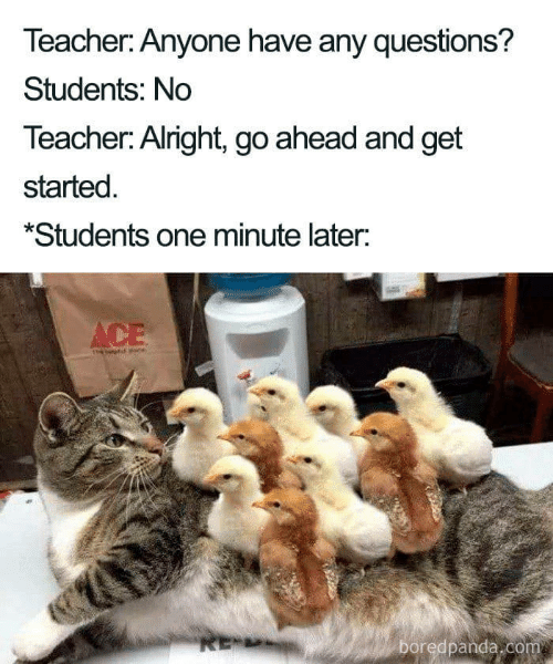 any questions: Teacher: Anyone have any questions?  Students: No  Teacher: Alright, go ahead and get  started  *Students one minute later:  ACE  RE-  boredpanda.com