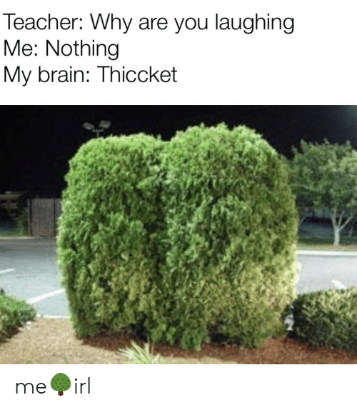 Teacher, Brain, and Why: Teacher: Why are you laughing  Me: Nothing  My brain: Thiccket me🌳irl