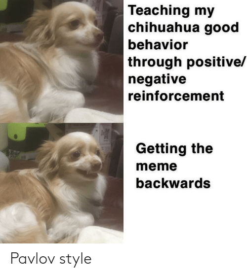 Reinforcement: Teaching my  chihuahua good  behavior  through positive/  negative  reinforcement  D  Getting the  127  meme  backwards Pavlov style