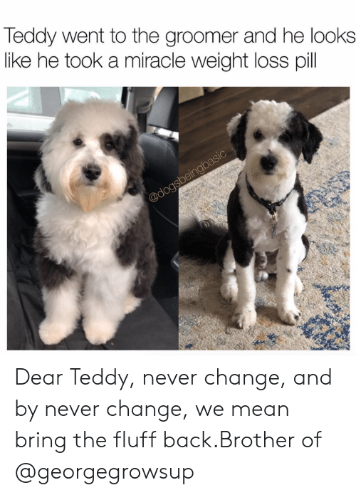 Instagram, Target, and Mean: Teddy went to the groomer and he looks  like he took a miracle weight loss pil Dear Teddy, never change, and by never change, we mean bring the fluff back.Brother of @georgegrowsup