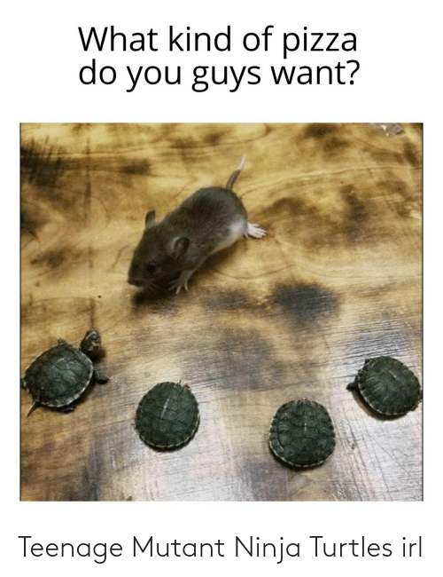 turtles: Teenage Mutant Ninja Turtles irl