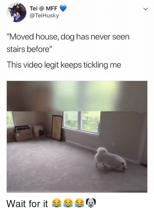 """tickling: Tei @ MFF  @TeiHusky  """"Moved house, dog has never seen  stairs before""""  This video legit keeps tickling me Wait for it 😂😂😂🐶"""