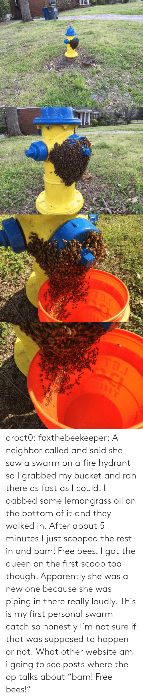 "Tel: TEL droct0: foxthebeekeeper:  A neighbor called and said she saw a swarm on a fire hydrant so I grabbed my bucket and ran there as fast as I could. I dabbed some lemongrass oil on the bottom of it and they walked in. After about 5 minutes I just scooped the rest in and bam! Free bees!  I got the queen on the first scoop too though. Apparently she was a new one because she was piping in there really loudly. This is my first personal swarm catch so honestly I'm not sure if that was supposed to happen or not.   What other website am i going to see posts where the op talks about ""bam! Free bees!"""