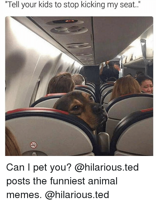 """memes hilarious: """"Tell your kids to stop kicking my seat."""" Can I pet you? @hilarious.ted posts the funniest animal memes. @hilarious.ted"""
