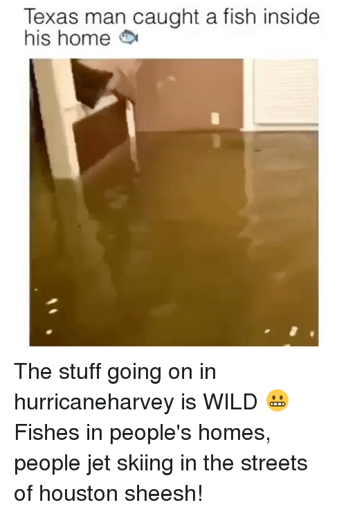 wildness: Texas man caught a fish inside  his home The stuff going on in hurricaneharvey is WILD 😬 Fishes in people's homes, people jet skiing in the streets of houston sheesh!