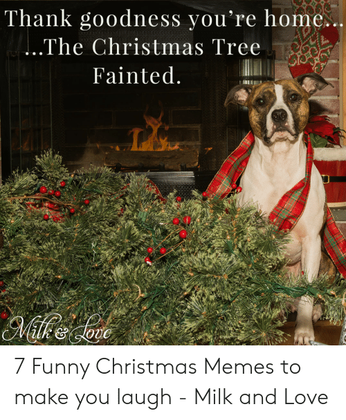 funny christmas memes: Thank goodness you're home.  The Christmas Tree  Fainted 7 Funny Christmas Memes to make you laugh - Milk and Love