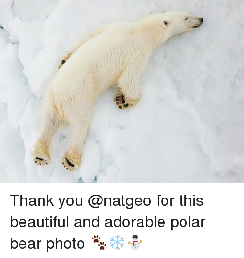 polarized: Thank you @natgeo for this beautiful and adorable polar bear photo 🐾❄️⛄️