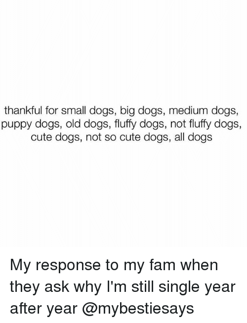 small dogs: thankful for small dogs, big dogs, medium dogs,  puppy dogs, old dogs, fluffy dogs, not fluffy dogs,  cute dogs, not so cute dogs, all dogs My response to my fam when they ask why I'm still single year after year @mybestiesays