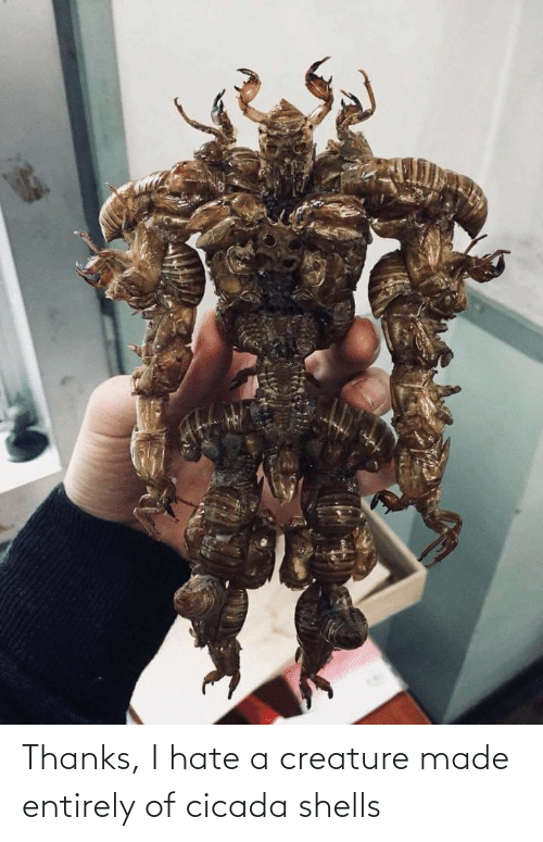 creature: Thanks, I hate a creature made entirely of cicada shells