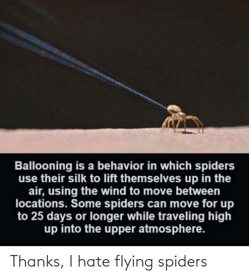 Spiders: Thanks, I hate flying spiders