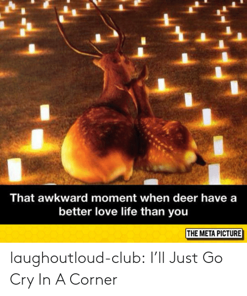 Club, Deer, and Life: That awkward moment when deer have a  better love life than you  THE META PICTURE laughoutloud-club:  I'll Just Go Cry In A Corner