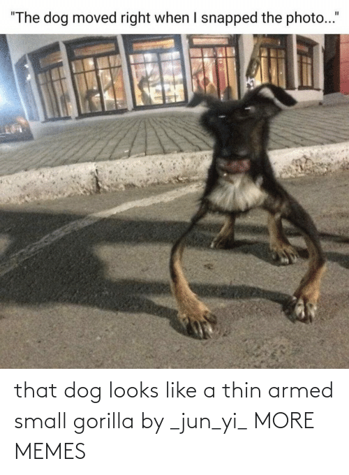 Looks Like: that dog looks like a thin armed small gorilla by _jun_yi_ MORE MEMES