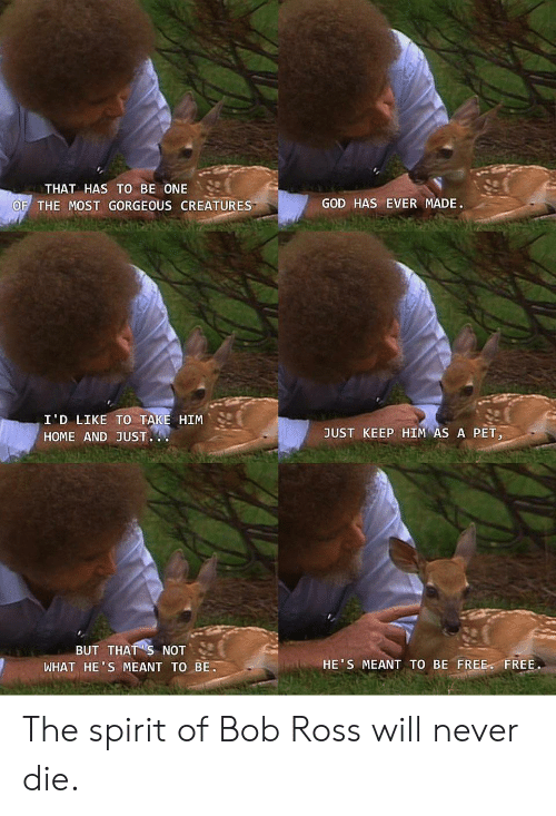 God, Bob Ross, and Free: THAT HAS TO BE ONE  GOD HAS EVER MADE.  OF THE MOST GORGEOUS CREATURES  I'D LIKE TO TAKE HIM  JUST KEEP HIM AS A PET,  HOME AND JUST.  BUT THAT S NOT  WHAT HE'S MEANT TO BE  HE'S MEANT TO BE FREE FREE. The spirit of Bob Ross will never die.