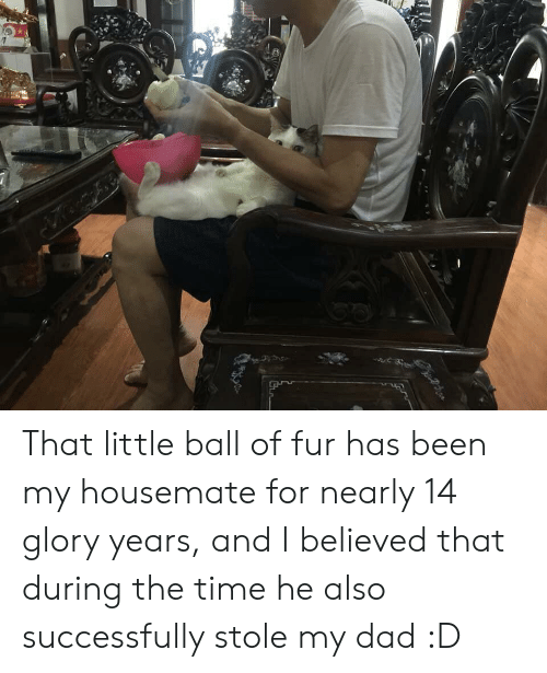 Dad, Time, and Been: That little ball of fur has been my housemate for nearly 14 glory years, and I believed that during the time he also successfully stole my dad :D