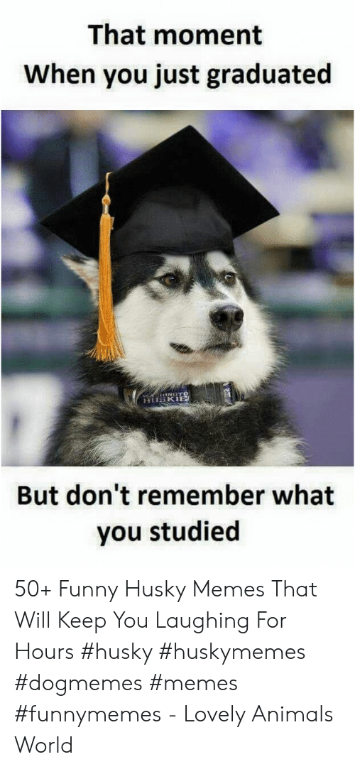 that moment when you: That moment  When you just graduated  But don't remember what  you studied 50+ Funny Husky Memes That Will Keep You Laughing For Hours #husky #huskymemes #dogmemes #memes #funnymemes - Lovely Animals World