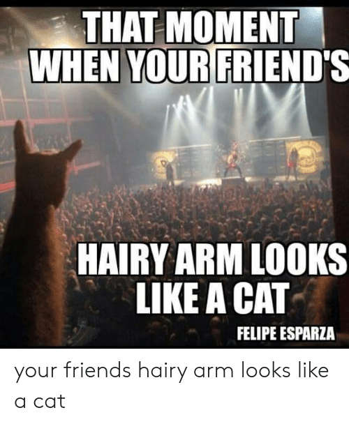 Friends, Felipe Esparza, and Cat: THAT MOMENT  WHEN YOURFRIEND'S  HAIRY ARM LOOKS  LIKE A CAT  FELIPE ESPARZA your friends hairy arm looks like a cat