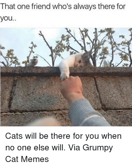 Memes, Grumpy Cat, and Being There: That one friend who's always there for  you Cats will be there for you when no one else will. Via Grumpy Cat Memes