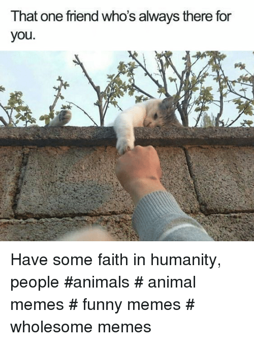 Animals, Funny, and Memes: That one friend who's always there for  you Have some faith in humanity, people #animals # animal memes # funny memes # wholesome memes