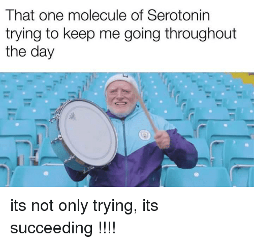 Succeeding: That one molecule of Serotonin  trying to keep me going throughout  the day its not only trying, its succeeding !!!!
